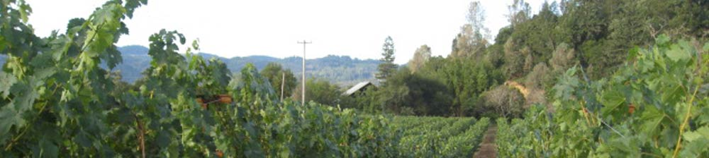 Barrett Vineyard